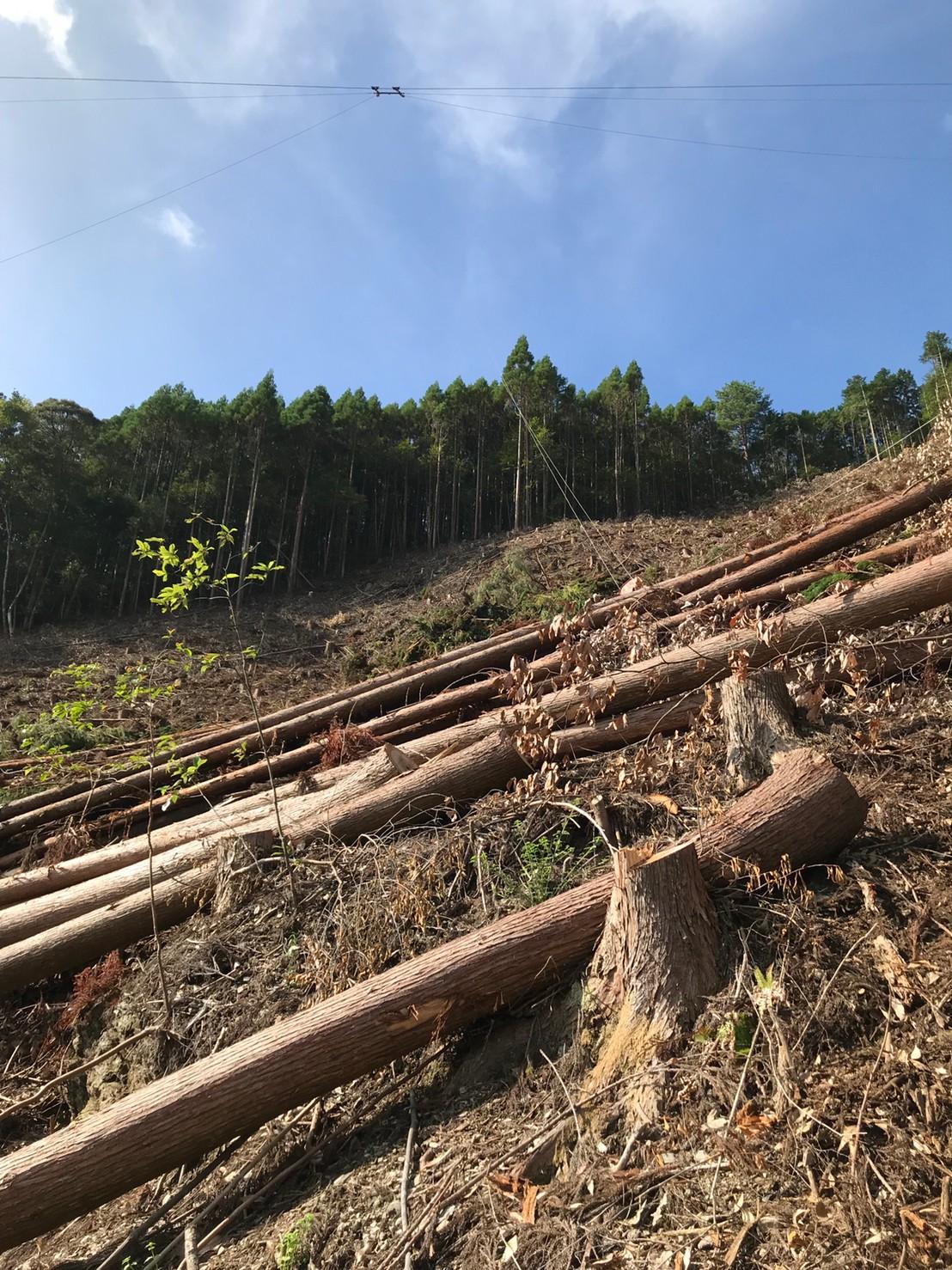 吉永林業 木材搬出